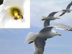 birdsbees20small20copy.jpg