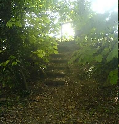 the-path-less-traveled.jpg